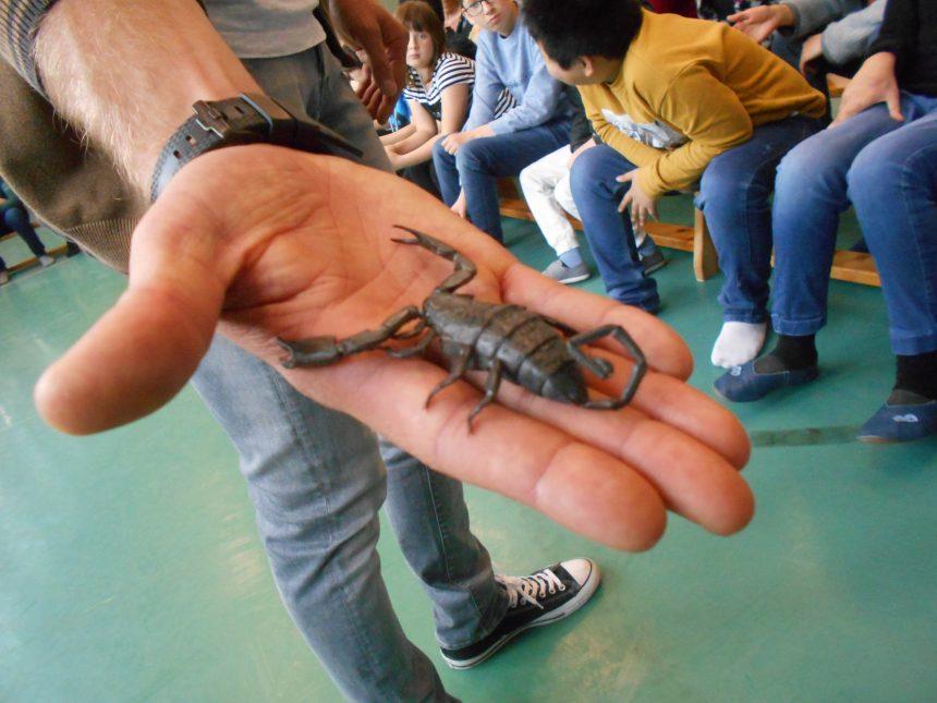 Schlangenschau
